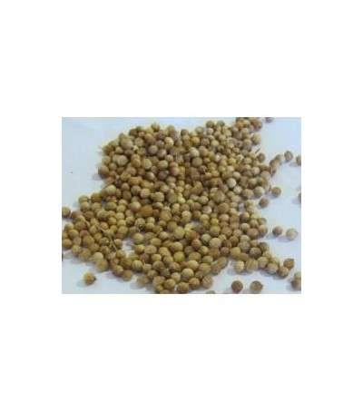 Coriander - Cilantro semillas