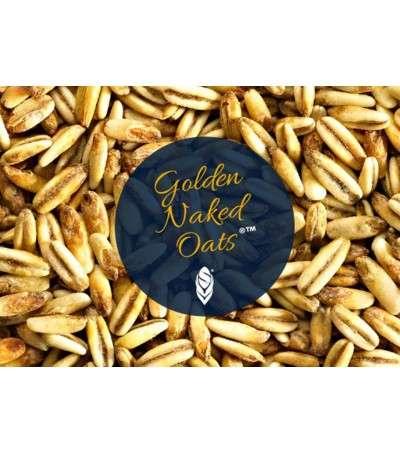 Malta Simpsons Golden naked oats (avena malteada)